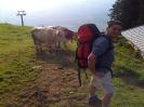 moinsch die Kuh isch zahm ?
